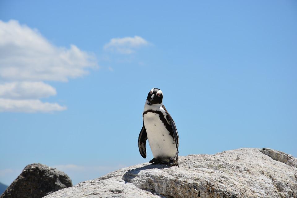 penguin-657527_960_720