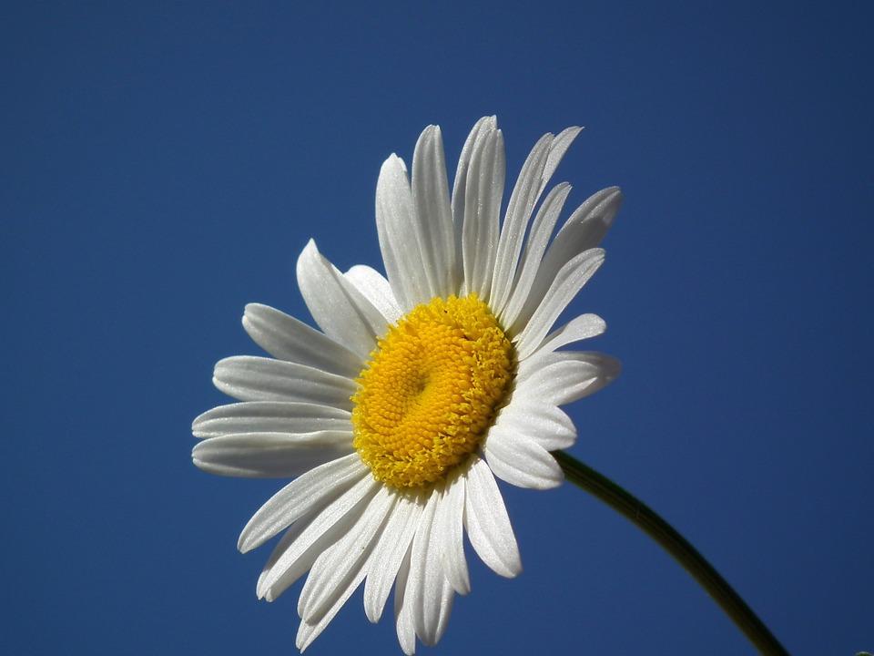 flower-198213_960_720